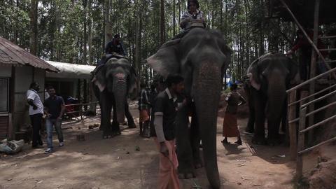 Elephants 0
