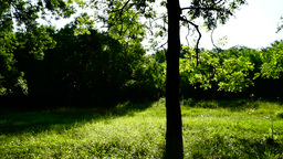 Grove with bright morning sun and rays , pan Footage
