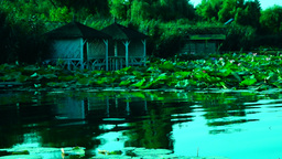 Serene Lacustrine Landscape With Lotus Leaves, hypnotic waves Footage