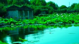 Serene Lacustrine Landscape With Lotus Leaves,Turquoise Lake Footage
