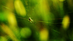 Spider net on the weeds Footage