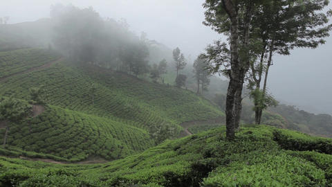 Tea plantations in Munnar, Kerala, India Footage
