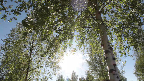 Trees in the wind and sun Footage