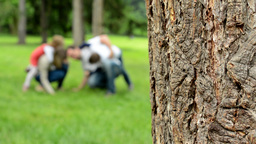 Detail Of Tree Bark - Blur Background: Family (middle Couple In Love, Cute Girl stock footage