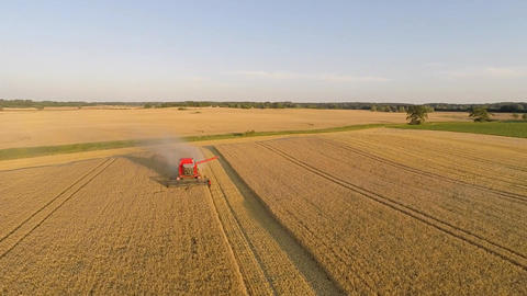 Aerial shot of harvesting barley with a combine harvester Footage