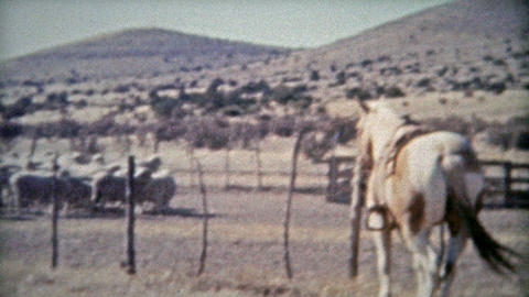 1953: Sheep Ranchers American Western Cowboys Dry Climate stock footage