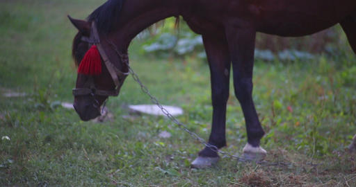 A horse eating grass Footage