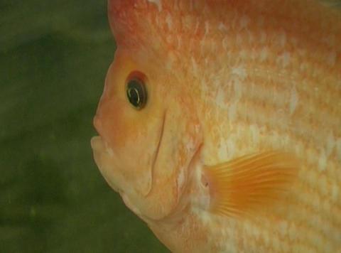 aquarium fishes Footage