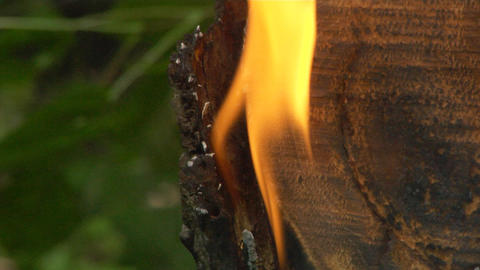 fire in forest Footage