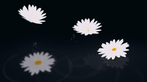 Loopable daisy background Stock Video Footage