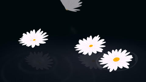 Loopable daisy background Animation