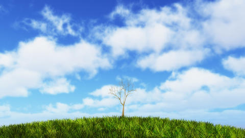 Growing tree on sunny hill Stock Video Footage