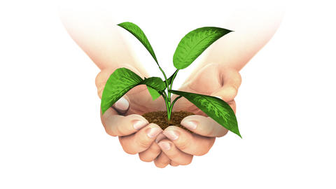 Plant Growing in hands Stock Video Footage