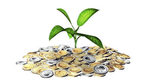Growing plant and a lot of golden coins Animation