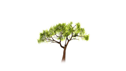 Growing tree on white Stock Video Footage