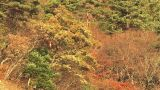 Autumn Leaves and Extensive Forest in Sai Lake,Yamanashi,Japan Footage