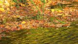 The Autumn Foliage Drifted Ashore A Pond stock footage
