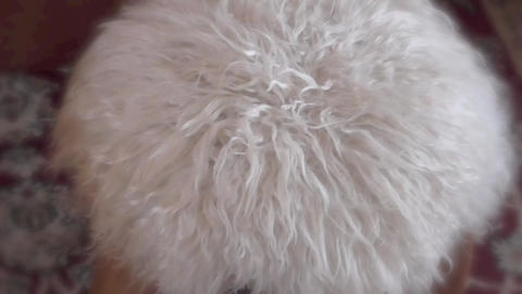 Fashion Fluffy Chairs Stock Video Footage