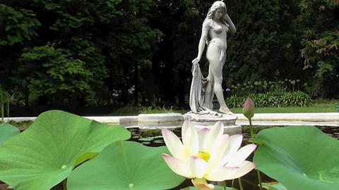 Lotus Blossom And Fountain With Woman Sculpture stock footage