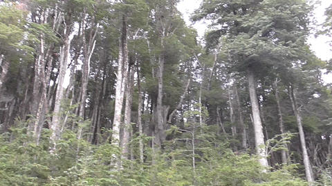 Panoramic Wood full of Trees Footage