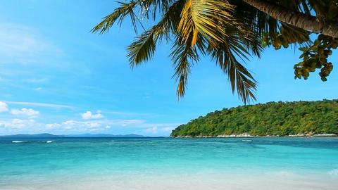 Tropical Heaven Footage