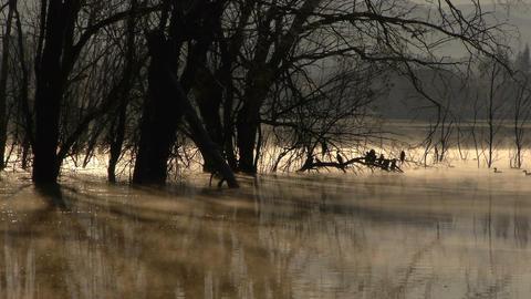 cormorants on Lake Footage