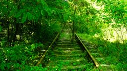 Trees and vegetation on abandoned rail train Footage