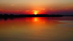 Beautiful sunset with bird hunting Footage