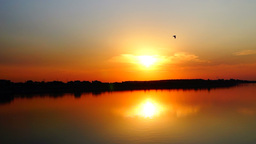 Serene sunset with flying birds on the lake Footage