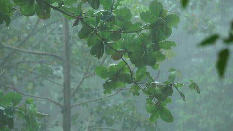 Tropical downpour Footage
