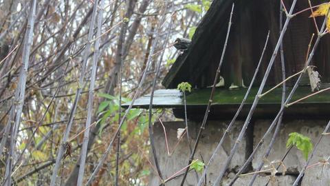 abandoned old barn Footage