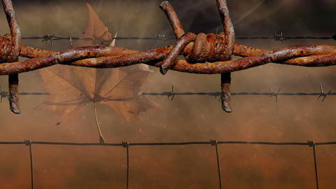 Old Barbed Wire On The Battlefield stock footage