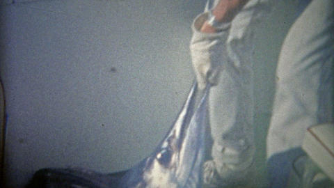 1962: Marlin sailfish caught and hauled into the boat on fishing trip Footage