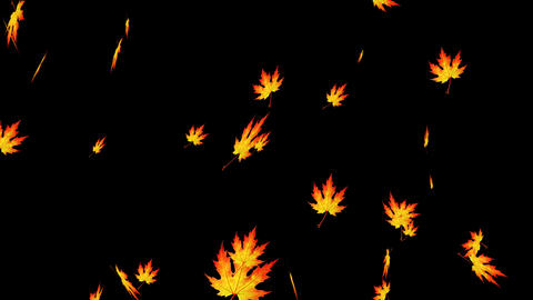 Falling autumn leaves background loop Animation