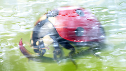 Liquid Ladybug