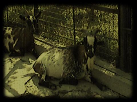 close-up scenes at barnyard Footage