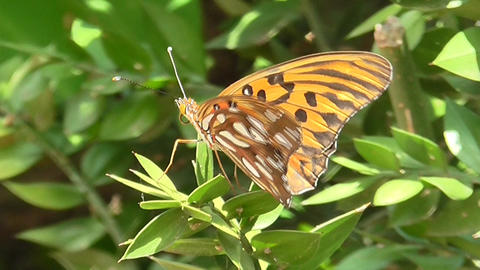Peaceful Butterfly in a Plant Footage