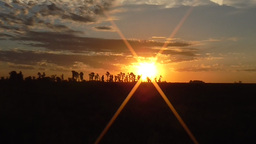 Sunset in the field , Zoom Out Stock Video Footage