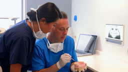 Dentist and coworker examining model teeth Footage