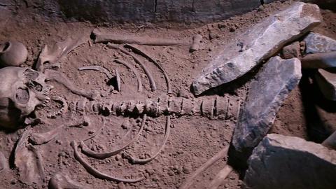 Human Skeleton, Skull, Bones, Excavated A Burial stock footage