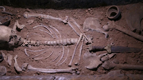 Human skeleton, skull, bones, excavated a burial Footage