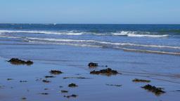 Seaweed On Scarborough Beach stock footage