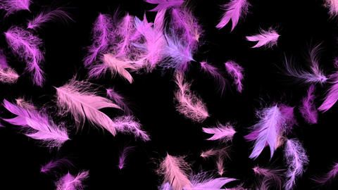 Pink Bird Feathers - Flying Loop - II Animation