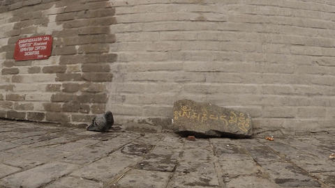 Pigeon Sitting Near The Stone On Which Is Written The Mantra Prayer Against The  stock footage