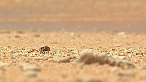 Hermit Crab and Summer Beach in Iriomote... Stock Video Footage