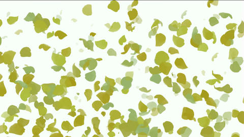 falling yellow leaves & ginkgo,flower petals Stock Video Footage