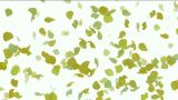 falling yellow leaves & ginkgo,flower petals Animation