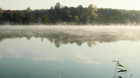Misty morning Stock Video Footage