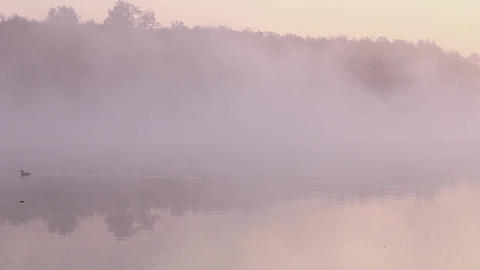 Duck in a fog Stock Video Footage