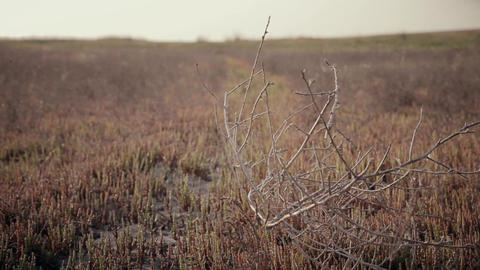 dry twigs flutter in the wind against a background of reddish grass Footage
